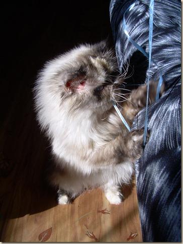Кошка Нори в новом доме
