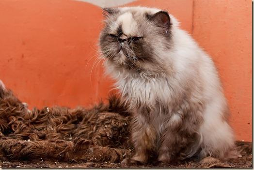 Кошка Нори в приюте