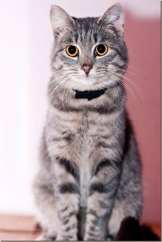 Кот Тоник