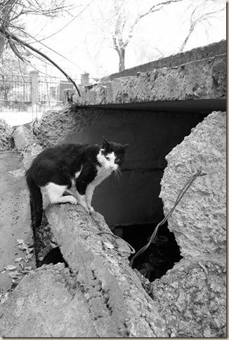 Источники появления бездомных животных в России