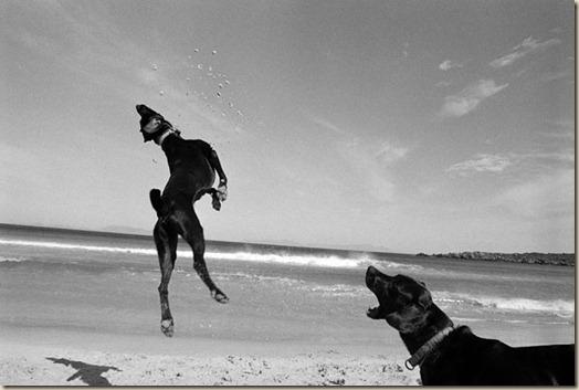 Интересные факты о собаках, поведение, психология