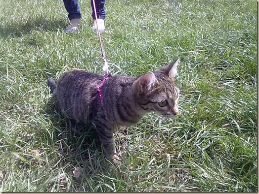 Кошка Боня на прогулке