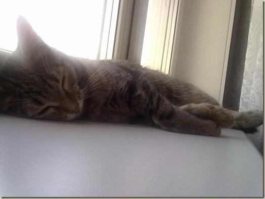 Кошка Боня дома