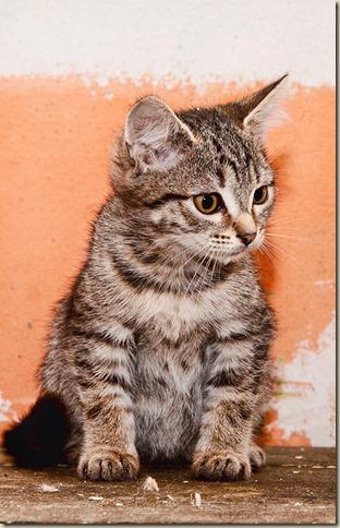 Кошка Боня в приюте