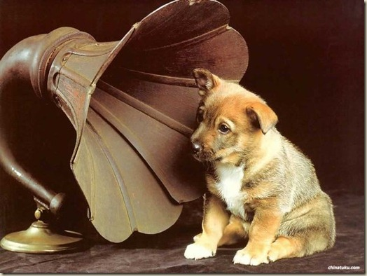 Как слышит собака, слух собаки