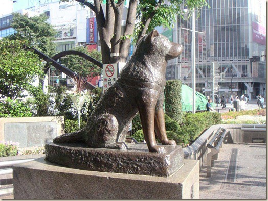 Hachiko, Statue, Shibuya, Хатико, статуя, Сибуйя