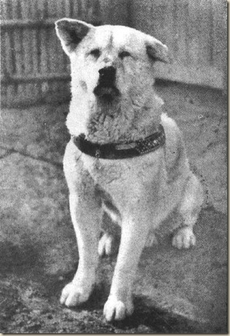 Hachiko, Хатико