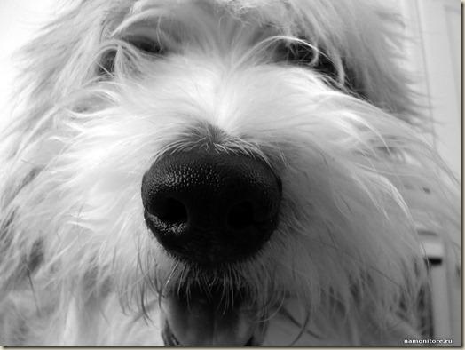Обоняние собаки, нюх