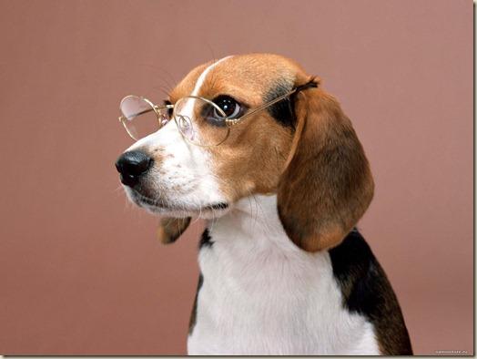 Как видит собака, зрение собаки