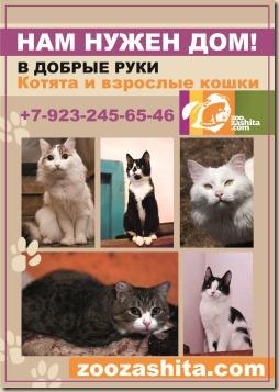 Макет информационного плаката о приюте. Кошки