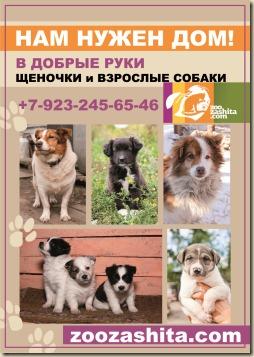 Макет информационного плаката о приюте. Собаки