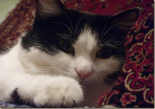 Кошка Анфиса