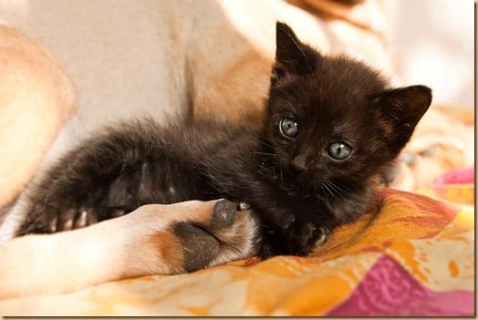 30 ноября - День домашних животных