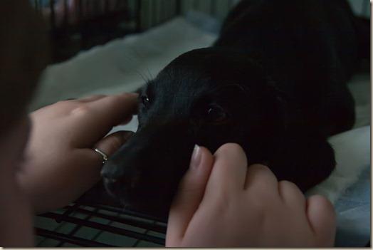 Собака Вита в больнице