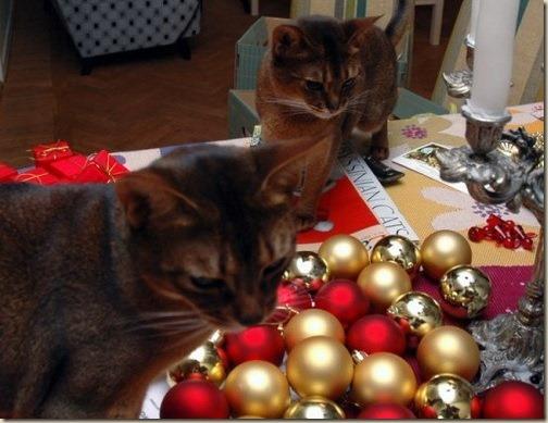 Ваш питомец и праздники. Инструкция по безопасности