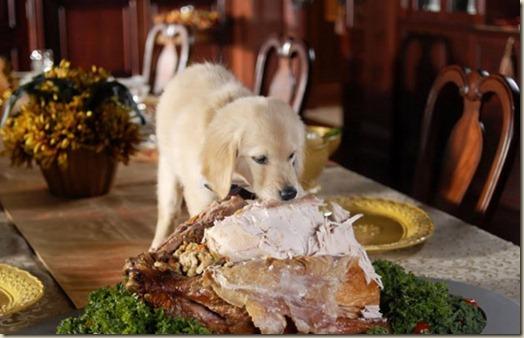 Собака ворует пищу со стола