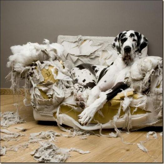 Проблемы с поведением вашей собаки