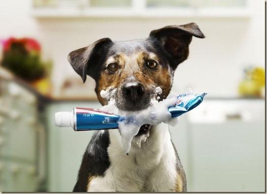Поведение собаки, взятой из приюта