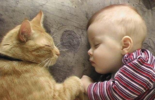 Картинки по запросу кошки и дети