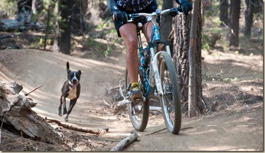 Собака нападает на велосипедистов, бегунов, автомобили