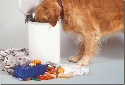 Собака ест отходы на улице