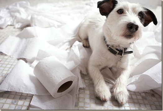 Собака грызет вещи в доме