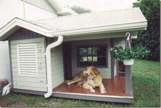 Собака в загородном доме
