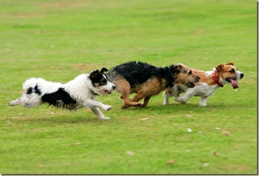 Собака убегает от хозяина