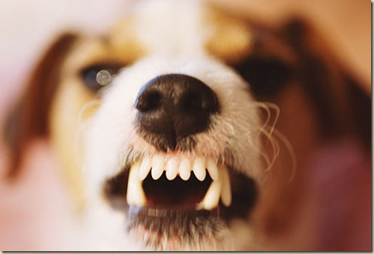 Собака боится незнакомых людей