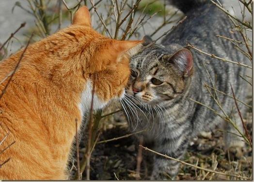 Отношение с другими животными