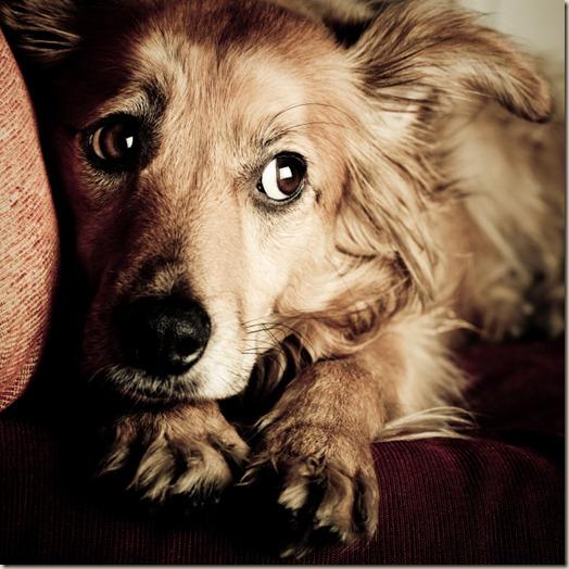 Собака боится незнакомой обстановки