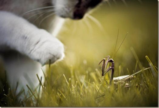 Животных меняется не только место но