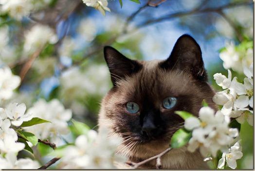 Домашняя кошка на дереве