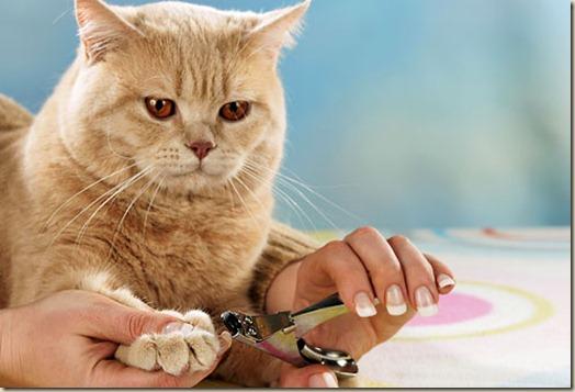 Как подстричь когти котенку