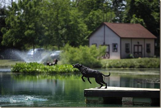 Собака прыгает в пруд