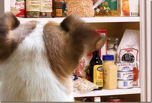 Кухонные шкафы: собакам вход воспрещен