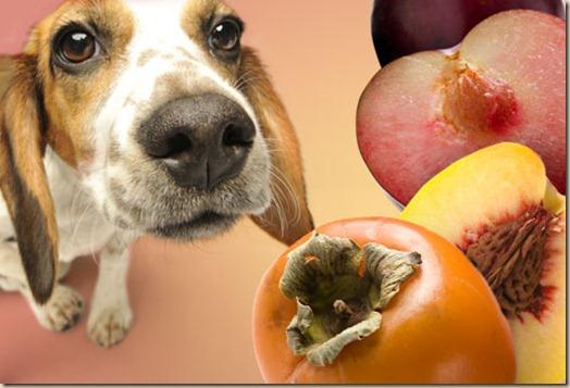 Хурма, персики и сливы