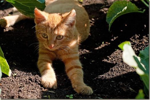 Котенок на даче