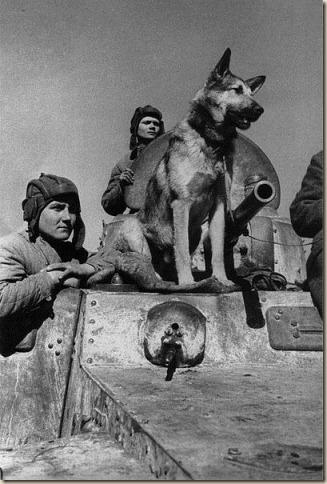 Собаки - участники Великой Отечественной Войны (Джульбарс)
