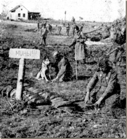 Собаки - участники Великой Отечественной Войны