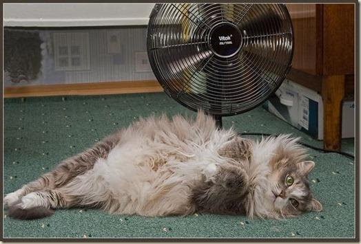 Животное в жару