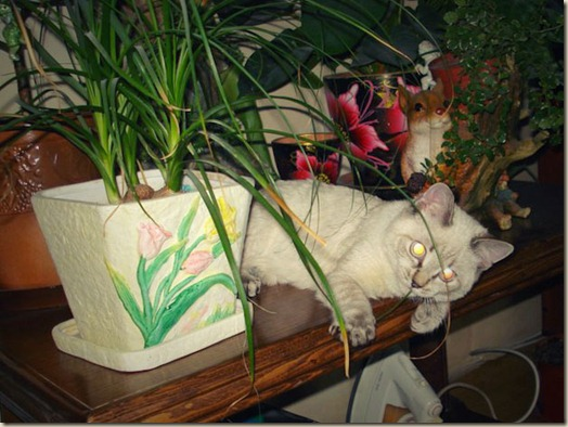 Котенок Самсон дома