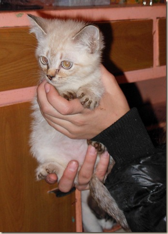 Котенок Самсон в приюте