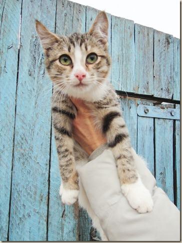 Кошки из частного приюта