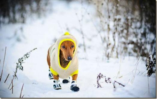 Собака зимой