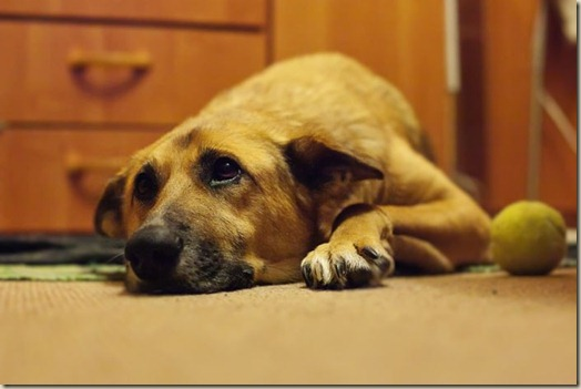 Собака Зара