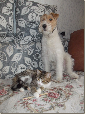 Котенок Буся с новым другом