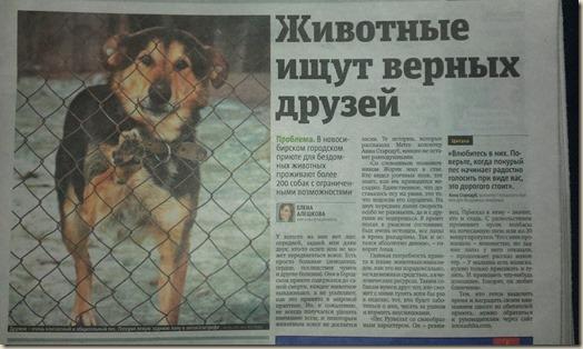 Статья о приюте в газете Metro