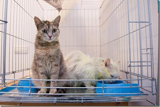Кошки Белка и Стрелка