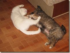Мурзик и Бася